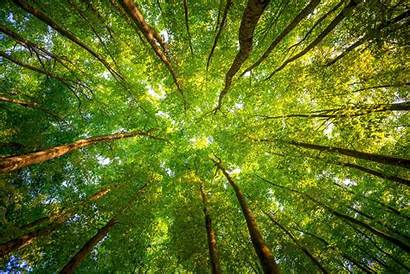 Forest Trees Nature Eye Worms Desktop Leaves
