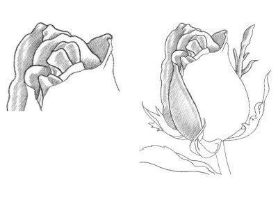 rose mit bleistift einfach zeichnen dekoking diy