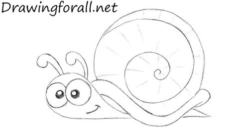 draw  cartoon snail drawingforallnet