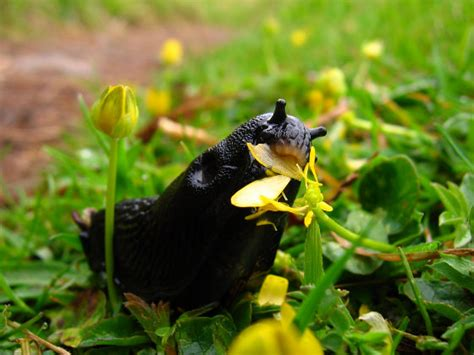 Organic Garden Pest Control  Without Toxins