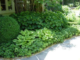 hydrangeas traditional landscape  atlanta  pinterest