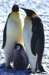 Pingouin Sur La Banquise : blog de o0sabine0o ~ Melissatoandfro.com Idées de Décoration