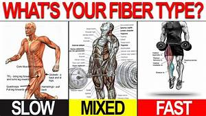 New Workout Program To Build Muscle Lose Fat  Customized To You