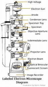 Microscope  2  Electron Micoscope