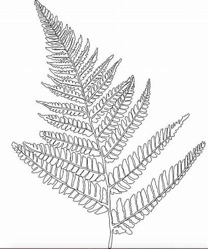 Coloring Fern