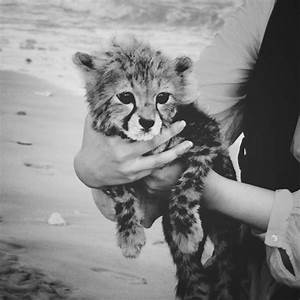 baby, black and white, cute, photography, tiger - image ...
