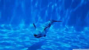 Download Dolphin Swimming Underwater Wallpaper 1920x1080 ...