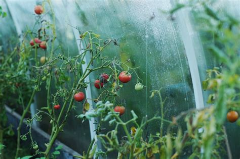 plants that will survive winter greenhouses how to ensure plants and flowers survive the winter yoyo uk