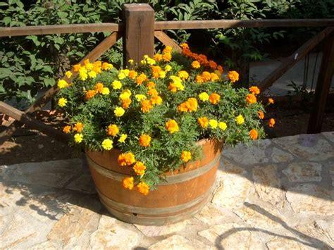 foto vasi di fiori quali sono i fiori pi 249 adatti da mettere in un vaso o nel
