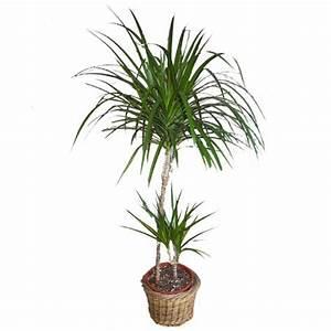 Plante Verte D Appartement : plantes vertes et air sain ~ Premium-room.com Idées de Décoration