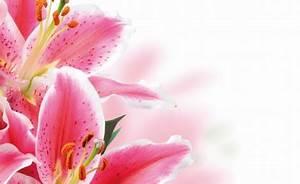 Blumen Bewässern Mit Wollfaden : blumen andrea ihre spezialisten f r hochzeits ~ Lizthompson.info Haus und Dekorationen