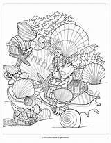 Coloring Seashells Beach Adults Sheets Sea Adult Instant Shells Colorear Dibujos Ausmalbilder Pdf Seashell Shell Colouring Printable Ocean Books Mar sketch template