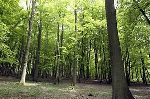 Foret Pour Bois : dynamic bois 24 projets pour mobiliser plus de bois ~ Edinachiropracticcenter.com Idées de Décoration
