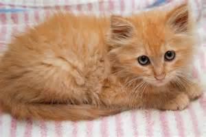 cat names for orange cats cafechoo image orange cat names