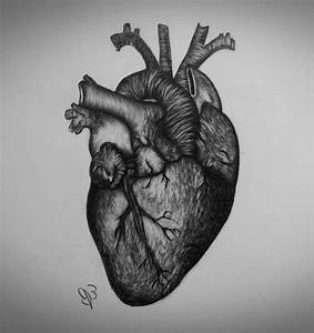 A Real Heart Drawing | www.pixshark.com - Images Galleries ...