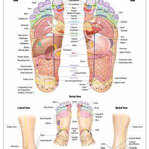 Reflexology Charts For Sale Reflexology Foot Chart Endocrine System The Stone