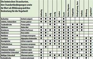 Welche Pflanzen Vertragen Sich Tabelle : hecken und str ucher jungj ger de ~ Lizthompson.info Haus und Dekorationen