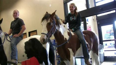 petsmart bareback horses champion