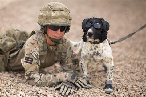 pin  brandi tellis  animals army dogs military