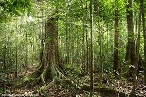 Facts About The Amazon Rainforest - The Ultimate Guide