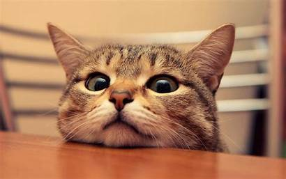Cat Desktop Wallpapers Funny