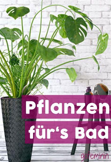 Kleines Bad Hohe Luftfeuchtigkeit by 54 Besten Badezimmer Einrichten Bilder Auf