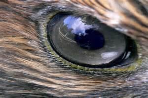 Unique Animal Eyes