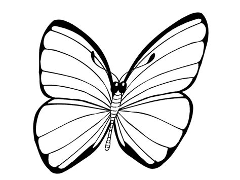 This post has a free butterfly coloring page that is great for kids of all ages (and adults too)! Butterfly coloring pages for kids