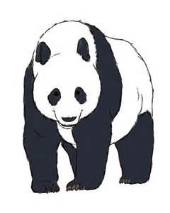 Panda Bear Drawings Realistic