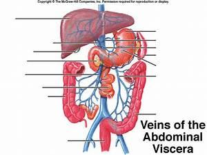 Veins Of The Abdomen Quiz