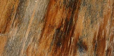 black mold removal    common places  find