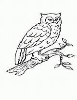 Coloring Owl Bird Tree Branch Birds Flying Drawing Owls Heart Birch Getdrawings Printable Adult Popular Getcolorings Coloringhome sketch template