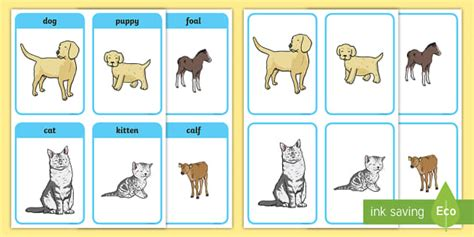 animals   young matching cards animals animal