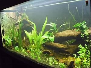 Aquarium Als Raumteiler : aquarium von g nther kr ger raumteiler s damerika gesb ~ Michelbontemps.com Haus und Dekorationen