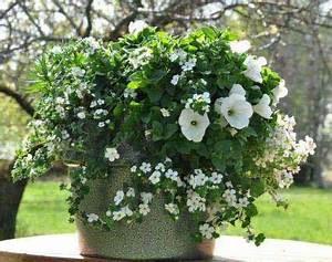 Jardiniere Fleurie Plein Soleil : plantes d ext rieur plein soleil pivoine etc ~ Melissatoandfro.com Idées de Décoration