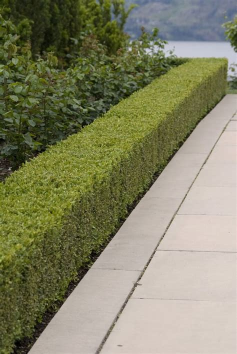 hedge design 41 incredible garden hedge ideas for your yard photos