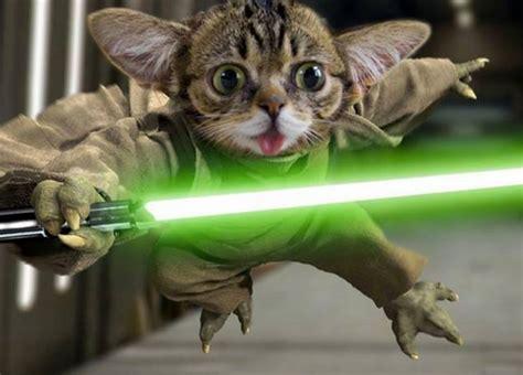 funny cat memes  cute cat pictures  pics