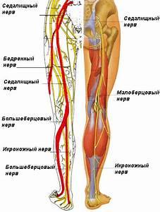 Мазь для лечения артроза тазобедренного сустава