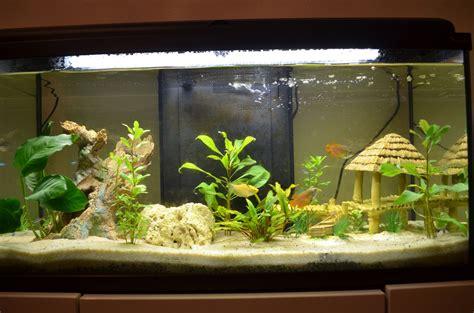 algues qui font des taches marrons sur les vitre et le filtre