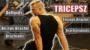 The Best Science-based Triceps Workout - Natural Bodybuilding  Adam Tari - Pro-physique