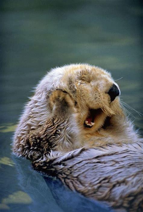 happy otter  cute  bear