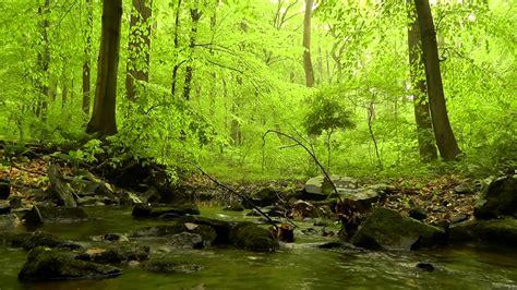 peaceful nature scenes  desktop weneedfun
