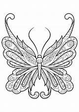 Moth Coloring Getcolorings Printable sketch template