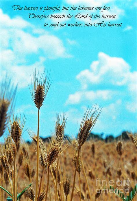 The Harvest is Plentiful Photograph by Thomas R Fletcher