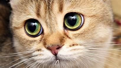 Desktop Cats Cat Eyes Wallpapers Kitten Kittens