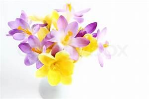 Spring flowers on white background | Stock Photo | Colourbox