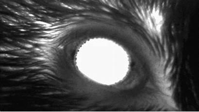 Pupille Pupilles Widen Souris Pupils Sommeil Taille