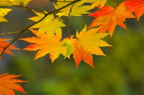 Herbst Deko Garten Selber Machen by Herbstdeko Selber Machen Ideen Mit Bl 228 Ttern Garten News