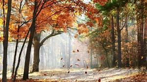 感伤秋季唯美落叶高清电脑桌面主题壁纸图片下载(3) 风景壁纸 壁纸下载 美桌网