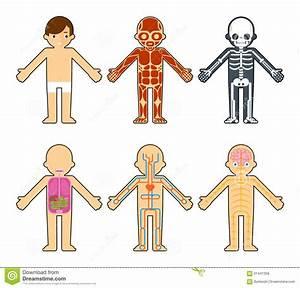Body Anatomy For Kids Stock Vector
